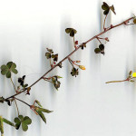 <em>Oxalis corniculata</em> L. 11/10/2007