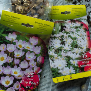 Small spring bulbs for moss balls