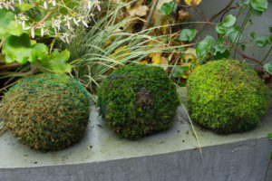Moss balls with small spring bulbs inside