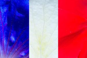 Contribution des fleurs du jardin à la fête nationale