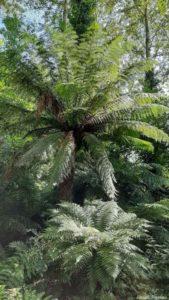 Jardin de la pépinière Vert-Tige