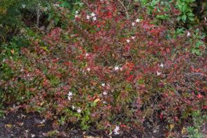 Autumn foliage and colourful calyces