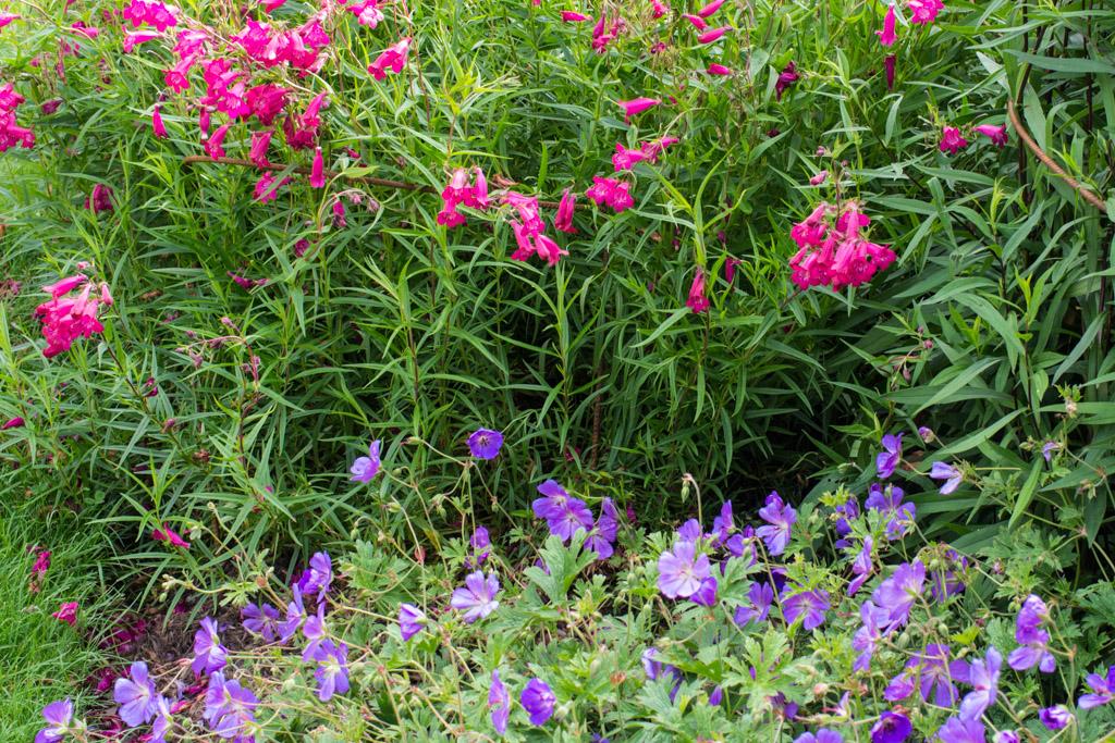 Quelques associations de couleurs le jardin de papi jo for Association de couleurs