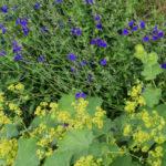 <em>Association de couleurs</em> bleu profond & vert chartreuse 12/07/2016