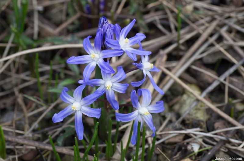 Premières fleurs début mars