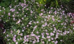 Pleine floraison d'été 2019