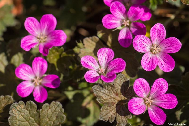 Premières fleurs fin avril 2020