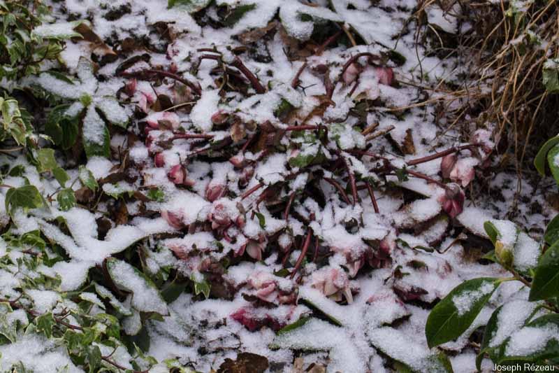 1er mars sous la neige à -1° C