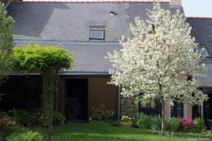 to the right: Malus Perpetu 'Evereste' in full bloom; to the left: Akebia quinata 'Cream-flowered' covering the pergola