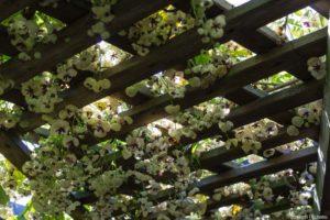 Avalanche de fleurs au printemps 2020