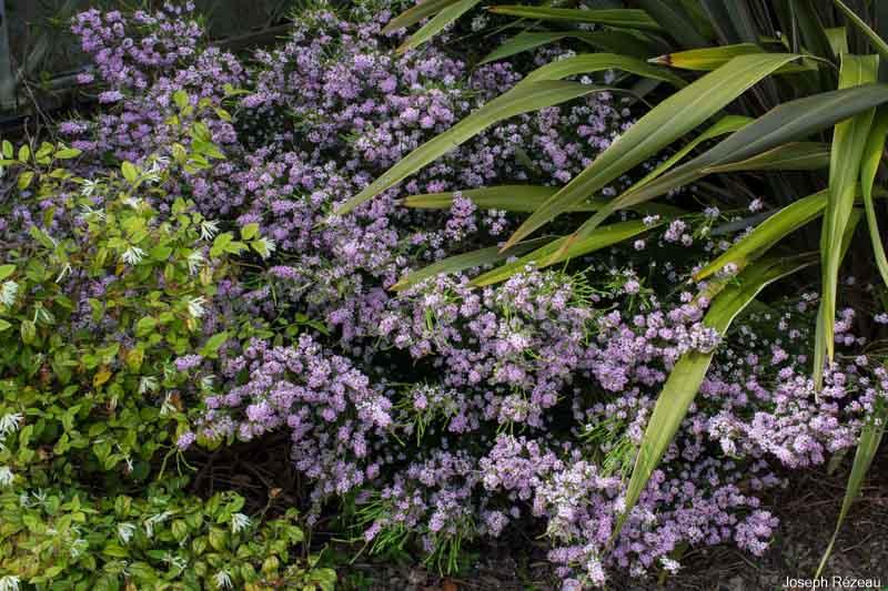 Fin de floraison en avril