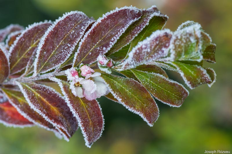 The frosted garden on New Year's Day 2021