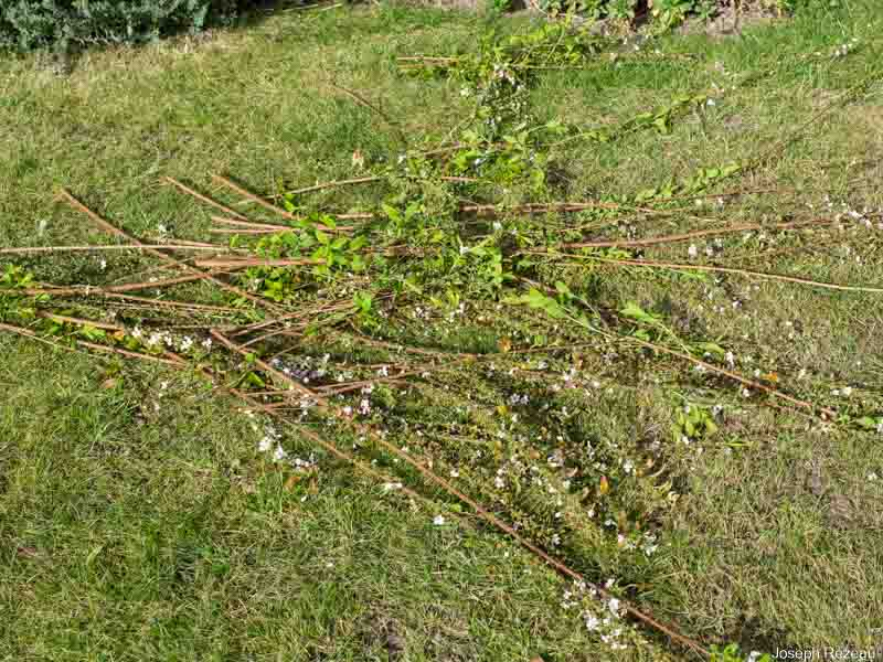 Spring pruning 2021 Removed stems