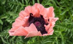 Fleur (gros plan)