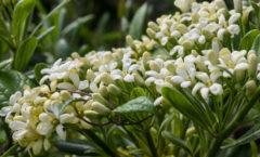 Floraison (détail)