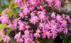 Floraison d'automne (en godets)