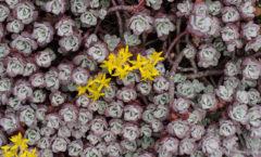 première floraison de la saison