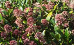 Pleine floraison (et parfum !)