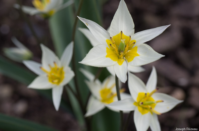Groupe de fleurs