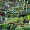 Délices de Plantes - Cesson-Sévigné