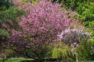 Parc Floral Haute Bretagne April 2019