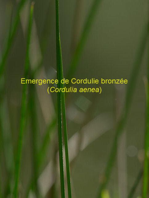 CORD-81